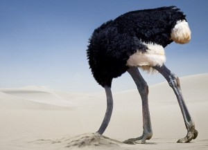 ostrich hiding its head under sand to protect it from strong wind