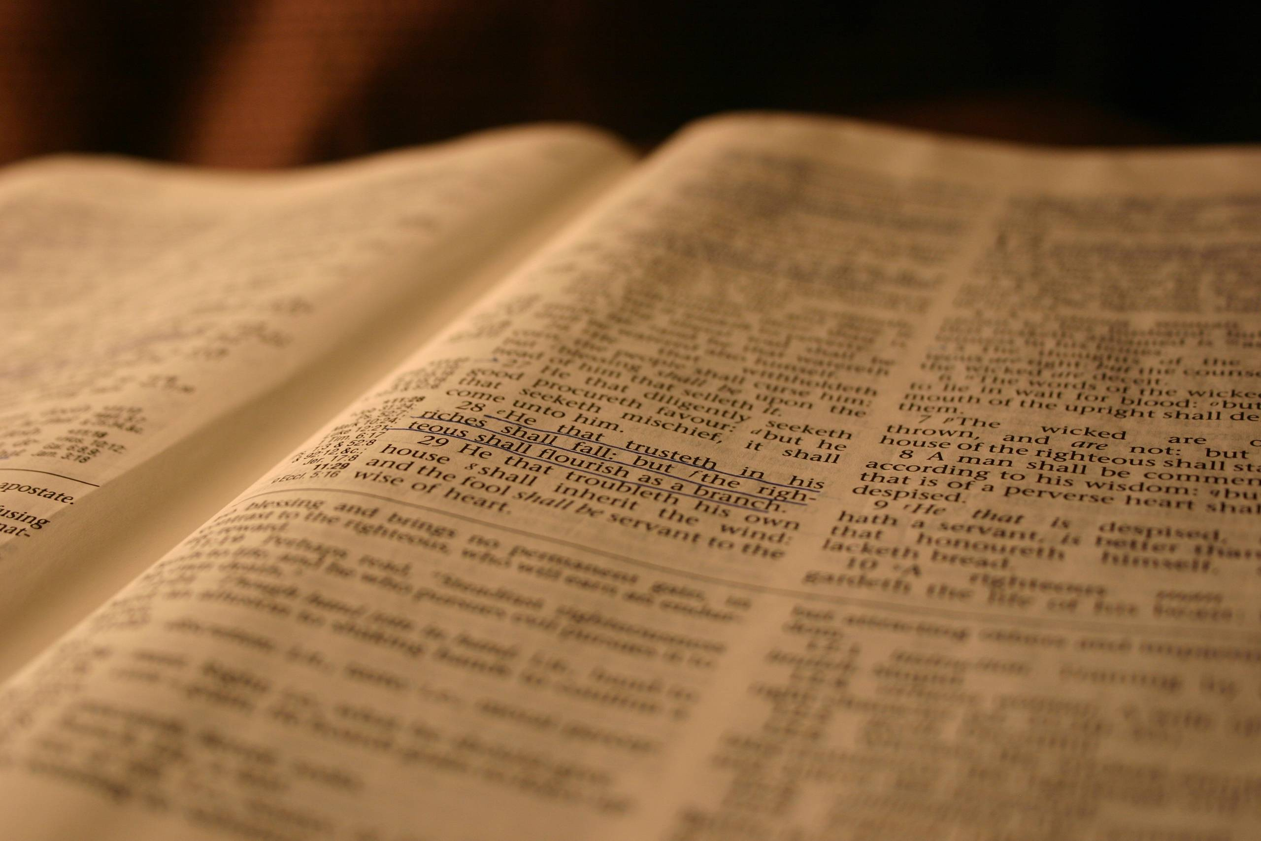 a disciplined Bible reader  Bible